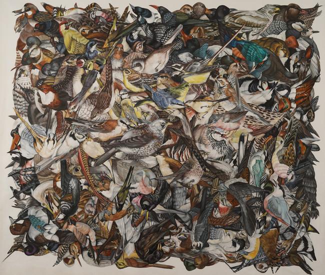 All the birds, 2018