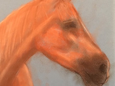 Horse drawing 6-12 year olds