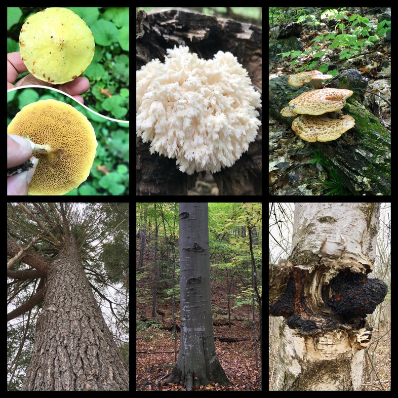 Mutalistic Relationships of Trees and Fungi