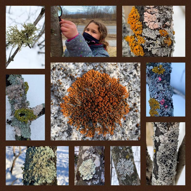 The Mysterious Lichen Universe