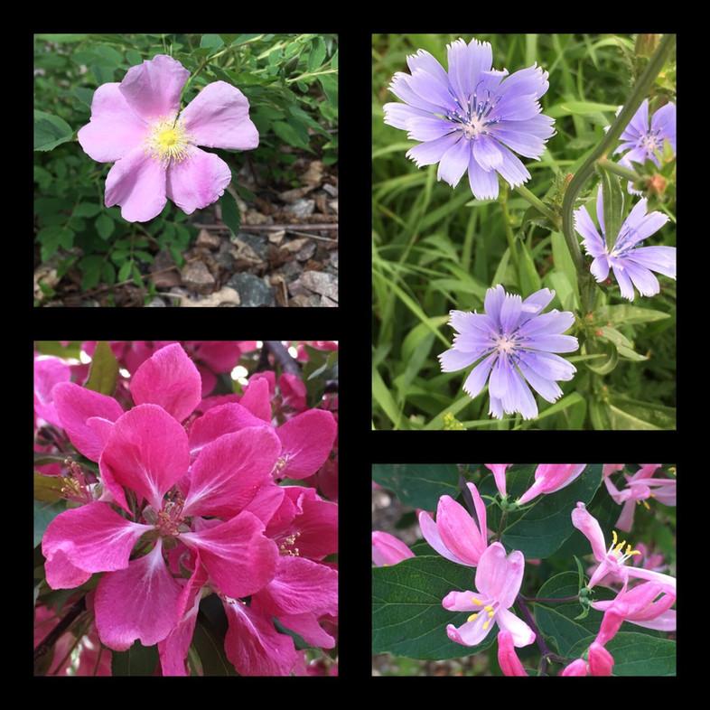 Flowers Are the Secret To Joy (Isn't 'Flow' imbedded in flower?)