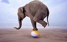 elephant-ballon.png