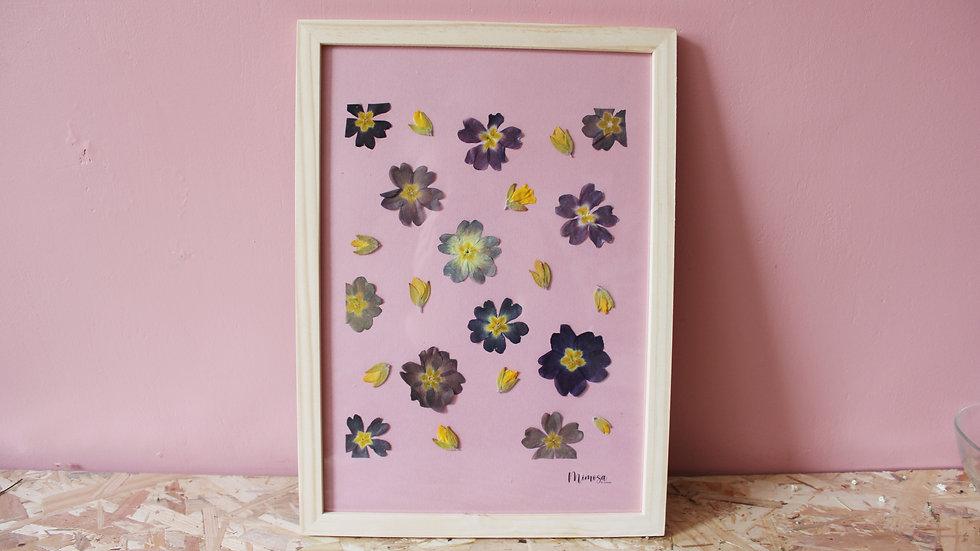 Herbier / Primula
