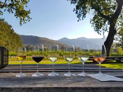 Vineyard wine tasting in South Africa..j