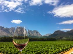 Franschhoek wine tasting in the Western