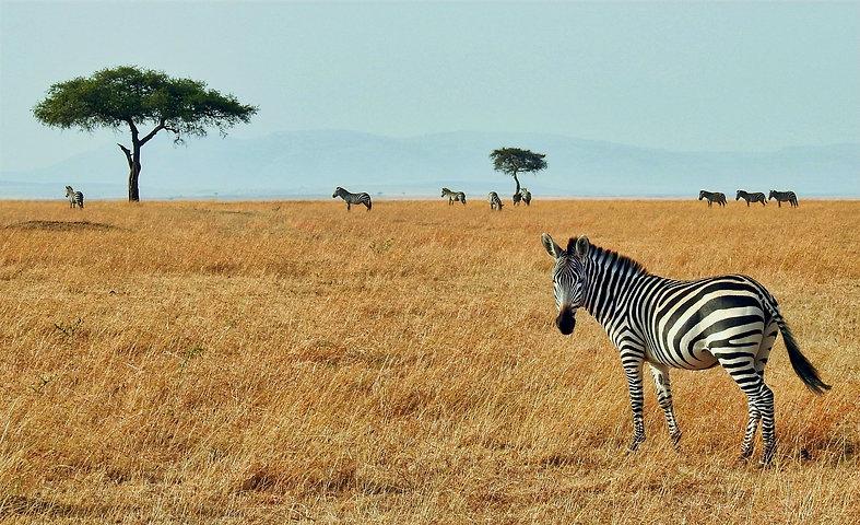 Masai%20Mara%20National%20Reserve%20Kenya_edited.jpg