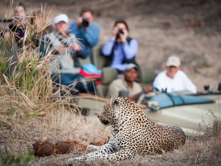Five Tips for Photographing Your African Safari