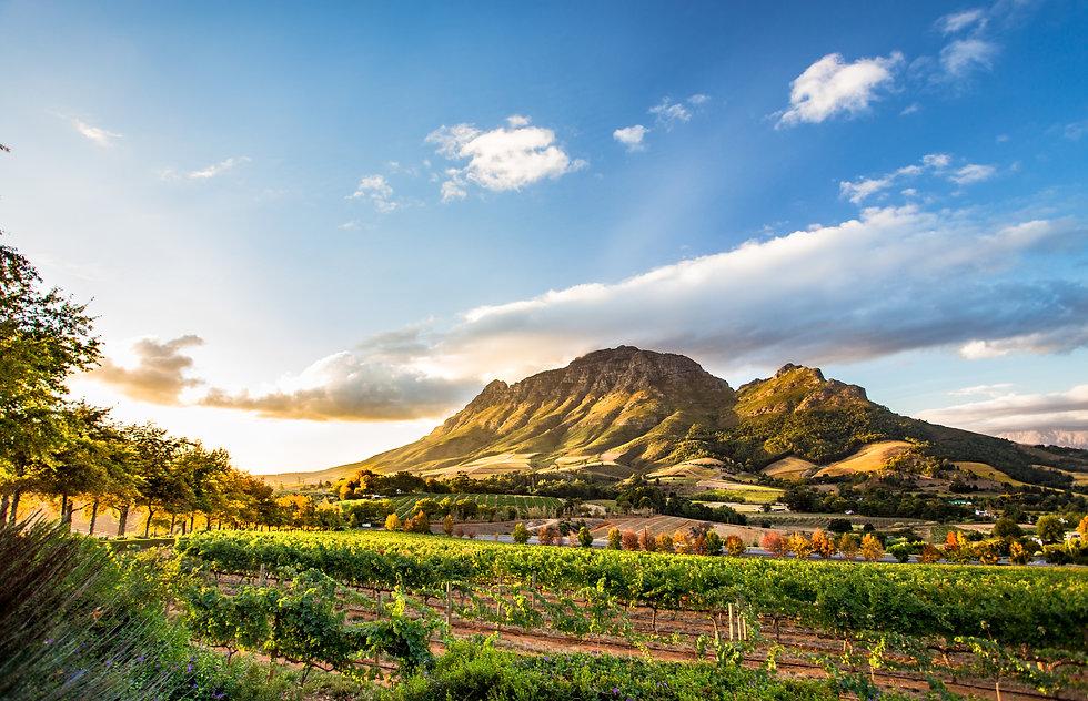 Wine region near Stellenbosch looking at