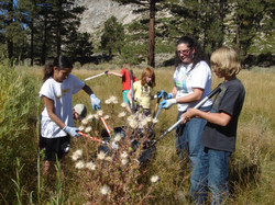 Invasive weed pulling 2010