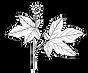 goldenseal-hydrastis-canadensis-medicina