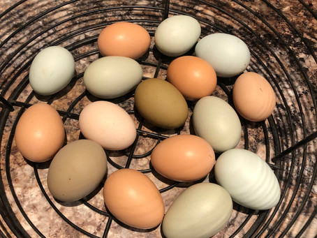 We have eggs! We sometimes have the garden weeded!