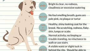 Health Checking Your Dog At Home
