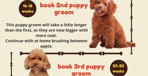 Introducing your puppy to professional grooming!