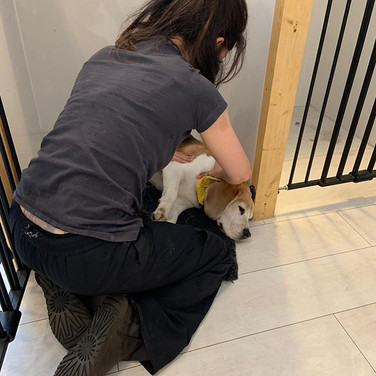 Oscar enjoying a post groom massage 💆♂