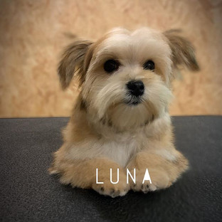 A warm welcome to lovely Luna, in for he