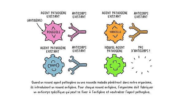 vaccines--antigens-antibodiesa-fr.jpg