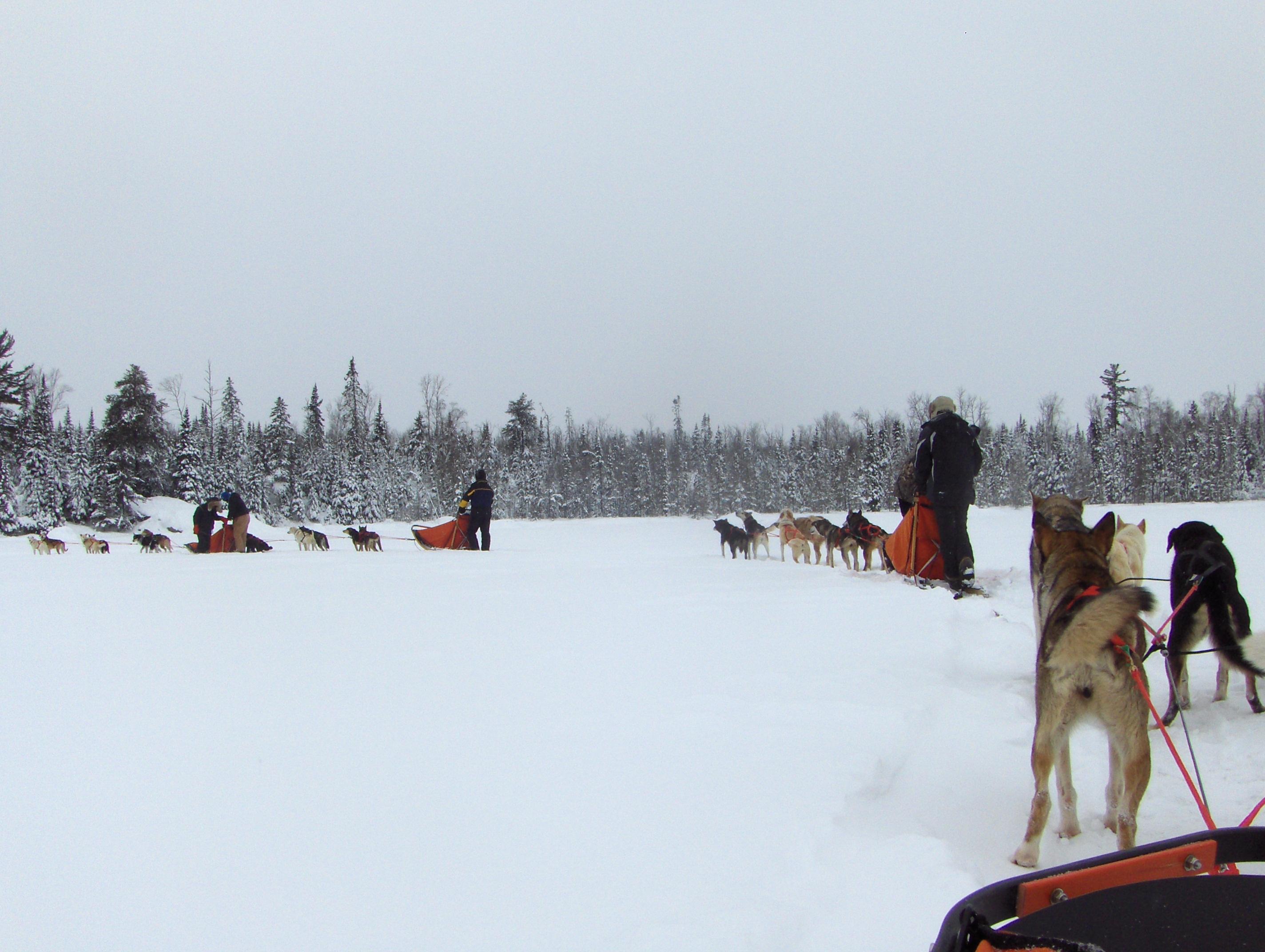 musher camp 059.JPG