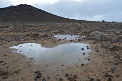 Darwin Plateau