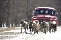 Volvo Dog Run 007 - Copy