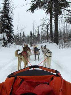 musher camp 004.JPG