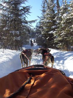 finch and dog trek 071.JPG