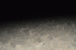 tough hiking through the night