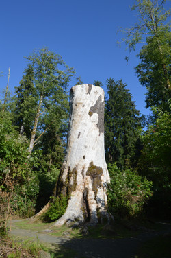big ol tree