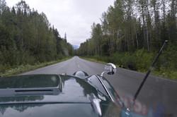 B.C. Bears Along Cassier Highway
