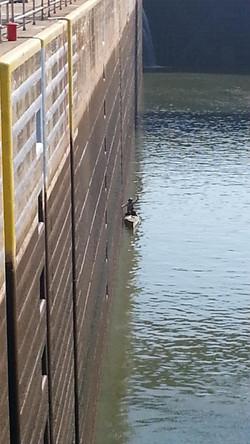 Lock on Ohio River THRU