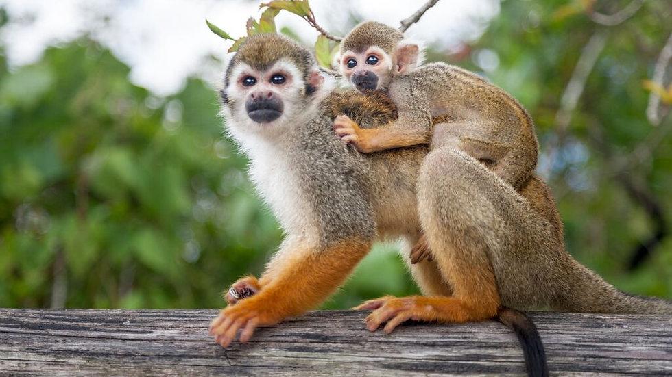 Monkey Land Tour