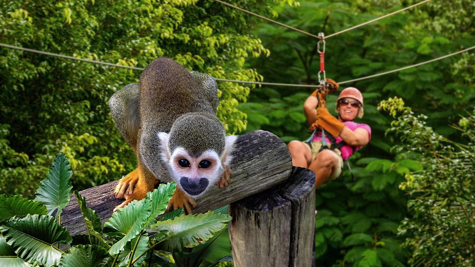 Zip Lines and Monkey Land