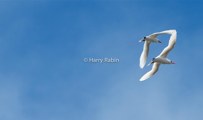 Nature+Seabird+touch+Left