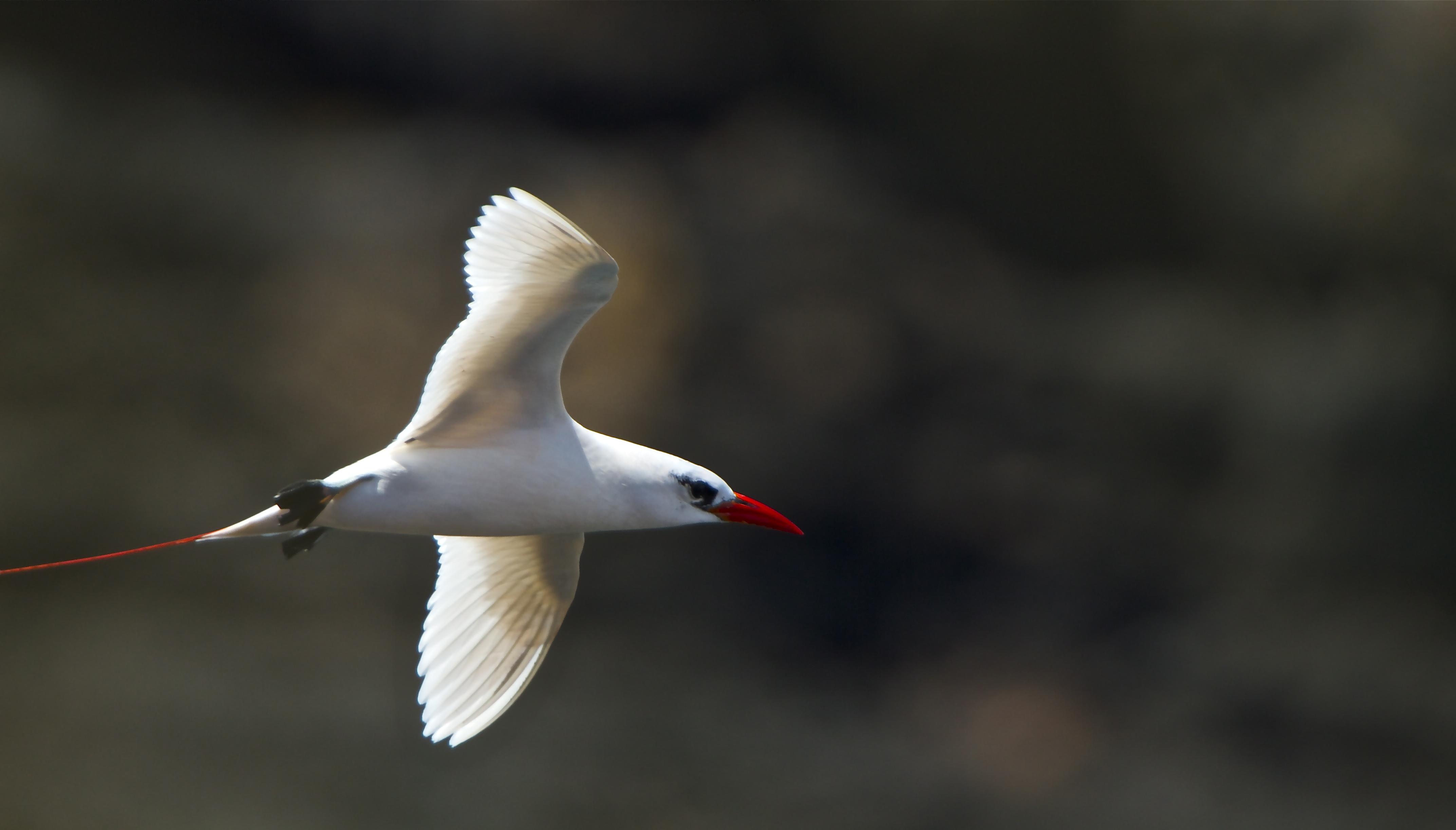 IMG_8266+Seabird