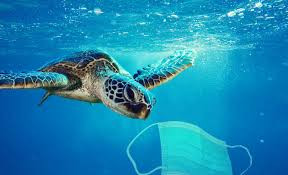 Face masks, gloves and other coronavirus waste are polluting the ocean.