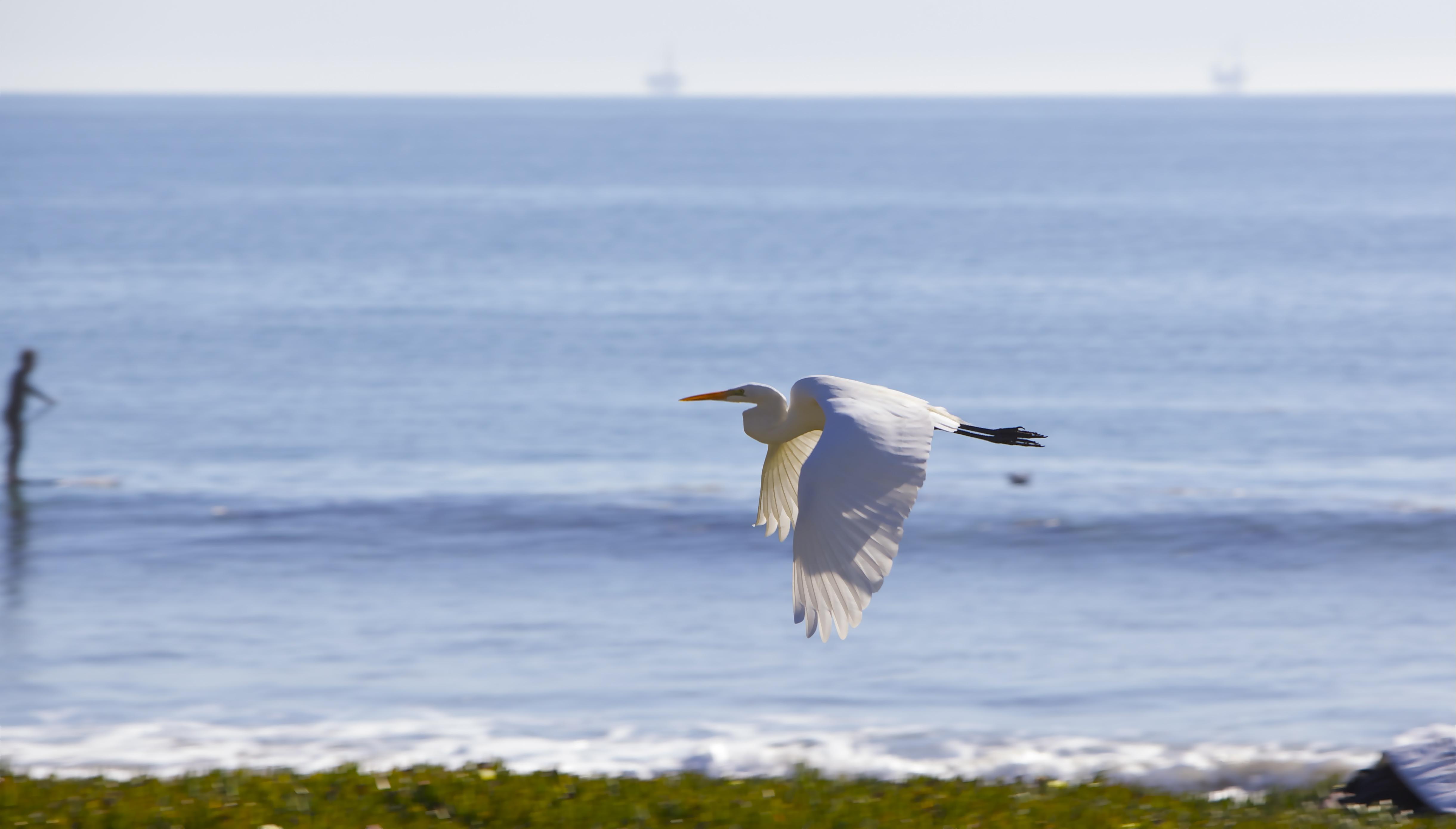 Egret grace