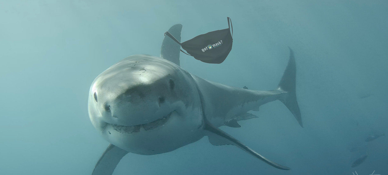 Great White Got Mask.jpg