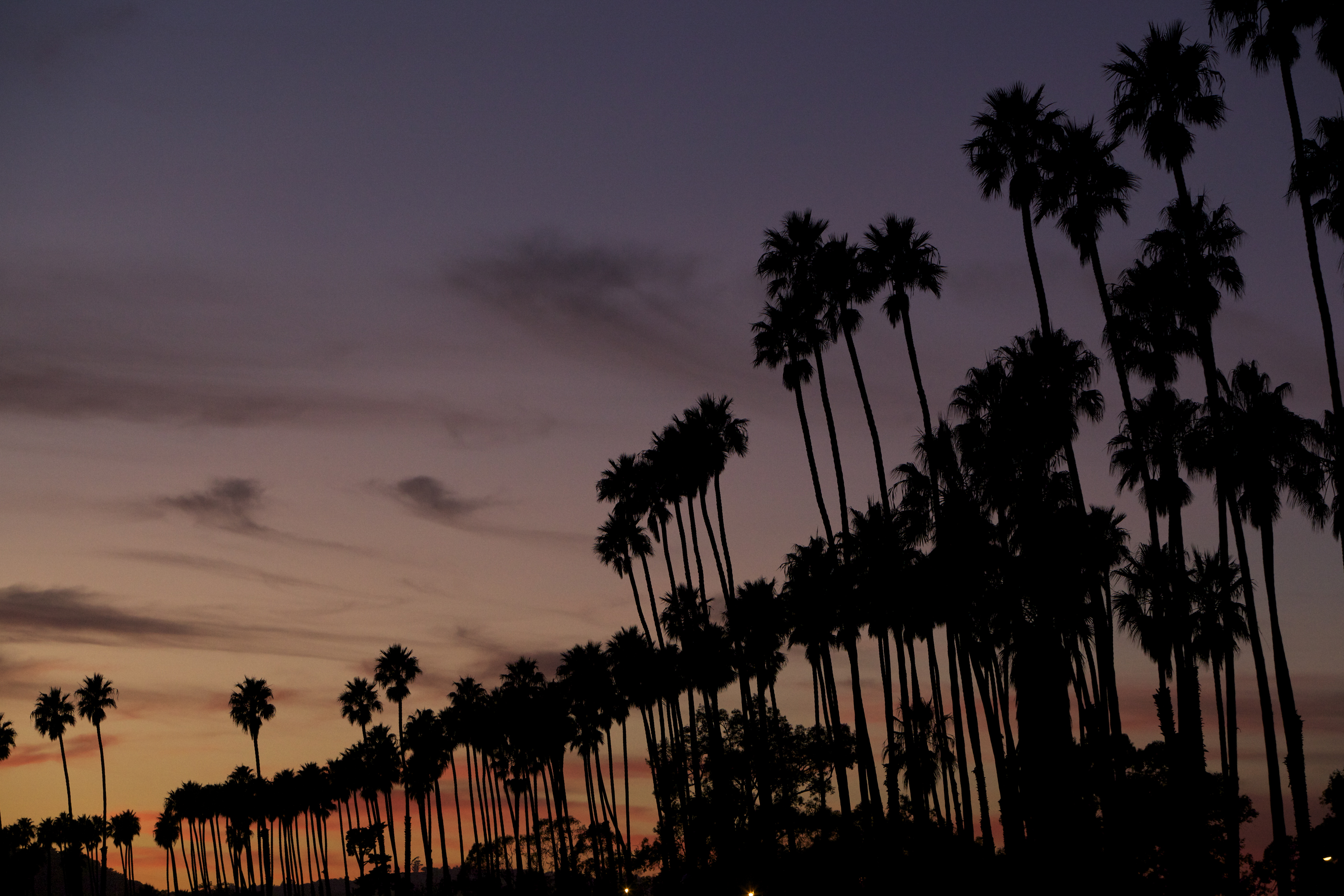 SB+Palms+Sunset