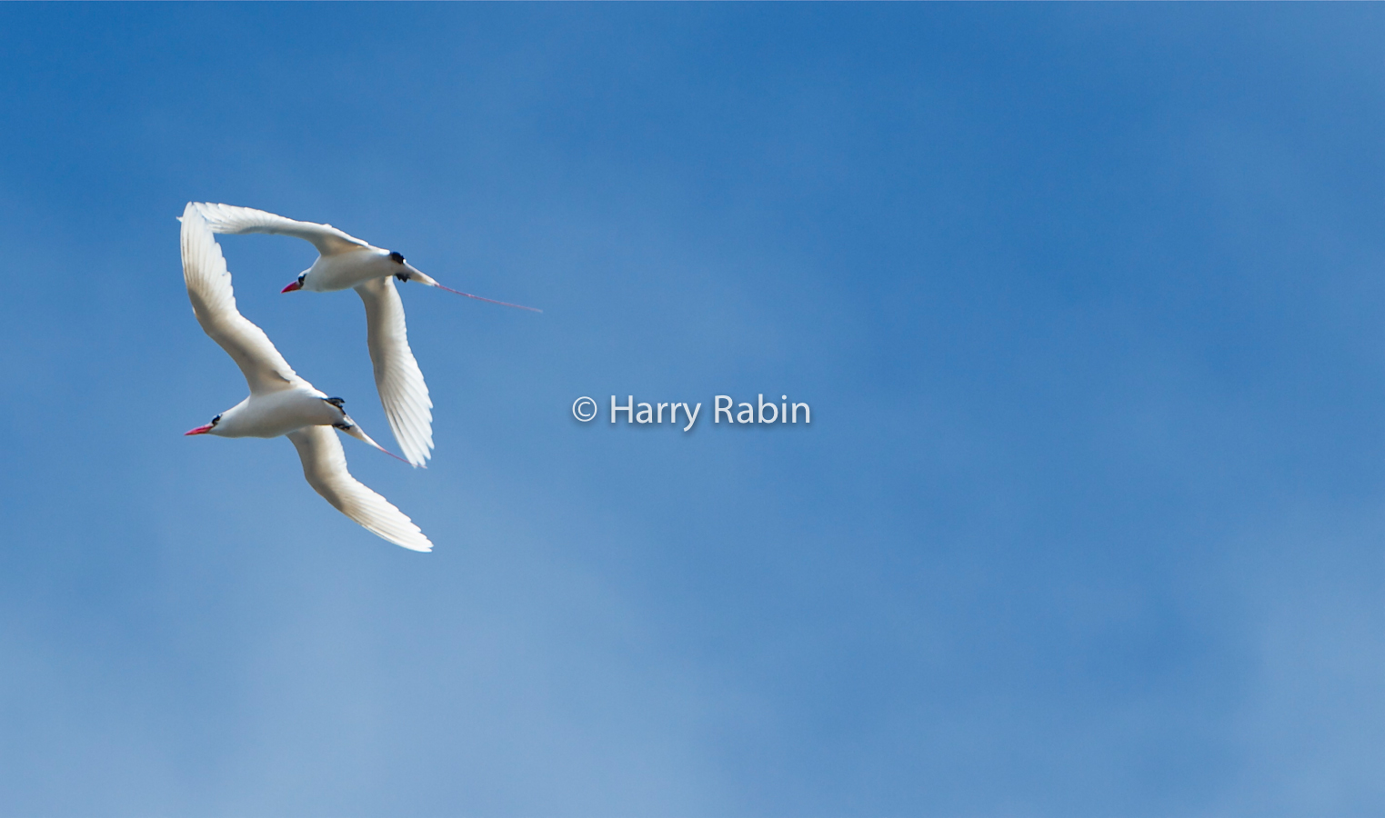 Nature+Seabird+touch+Right