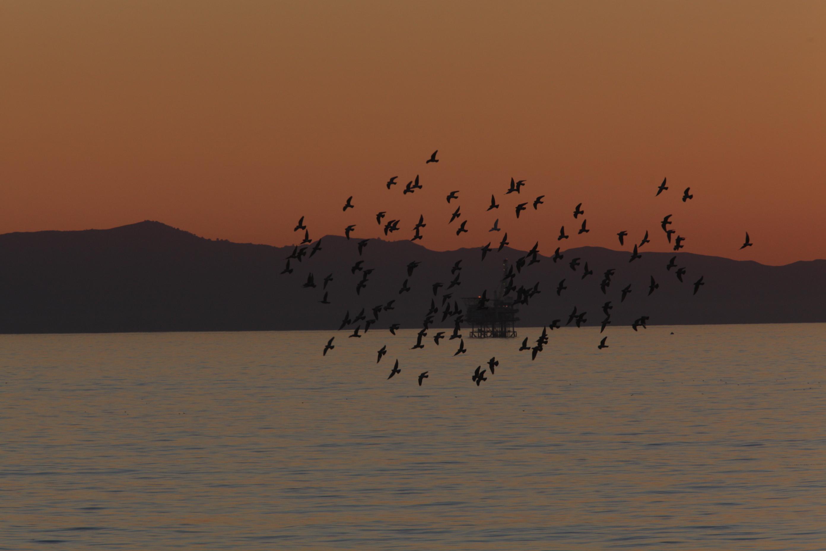 Carp+Bluffs+Birds+at+Sunset
