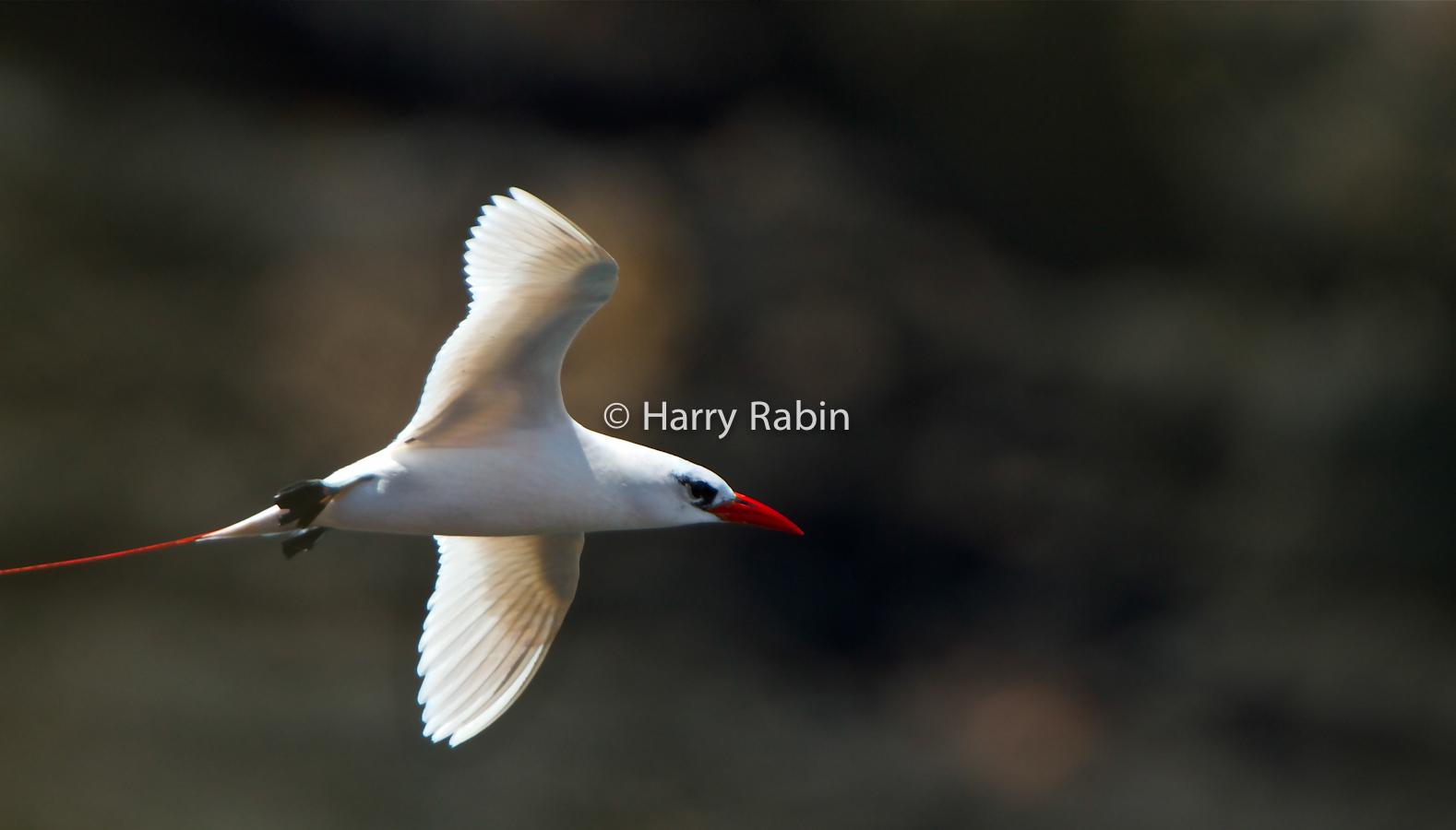 Nature+Seabird