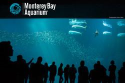 Outer reef Monterey Bay Aquarium