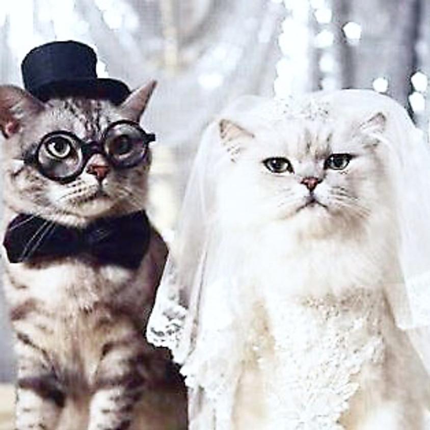 Royal Wedding Viewing Pawty!