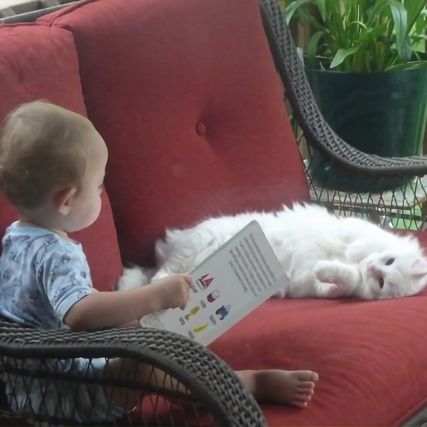 Storytime With Cats!