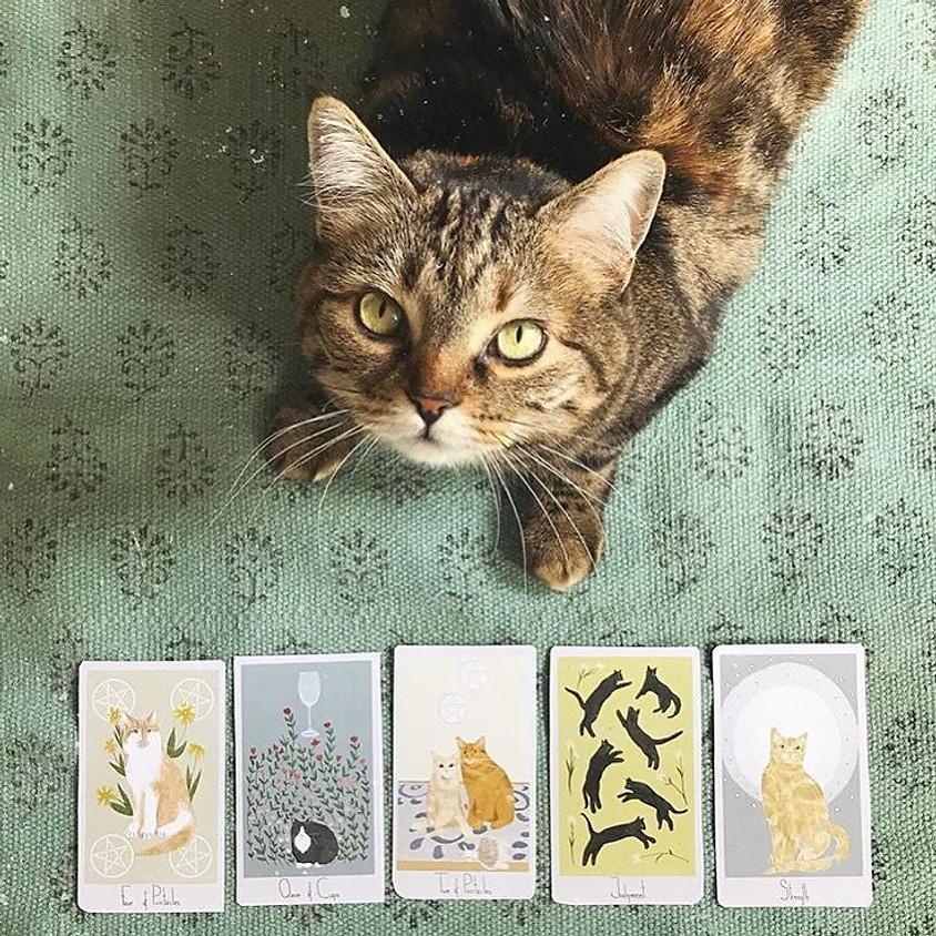 Tarot with Kitties!