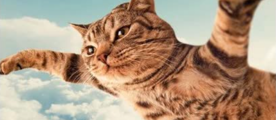 Flying Cats Oh My! An OBE.