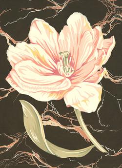 Open Tulip on Black Marble #57