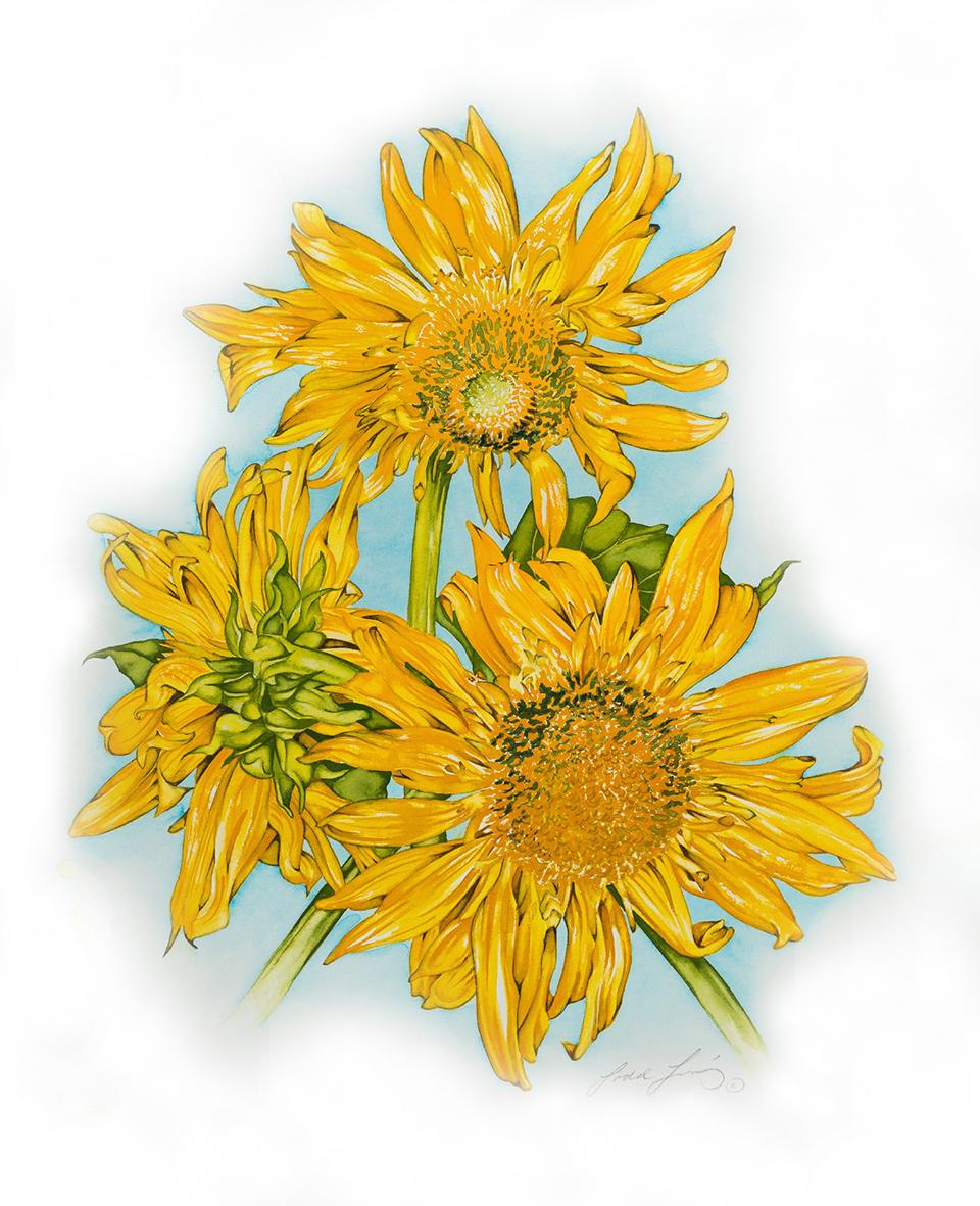 Jacksonville Sunflowers