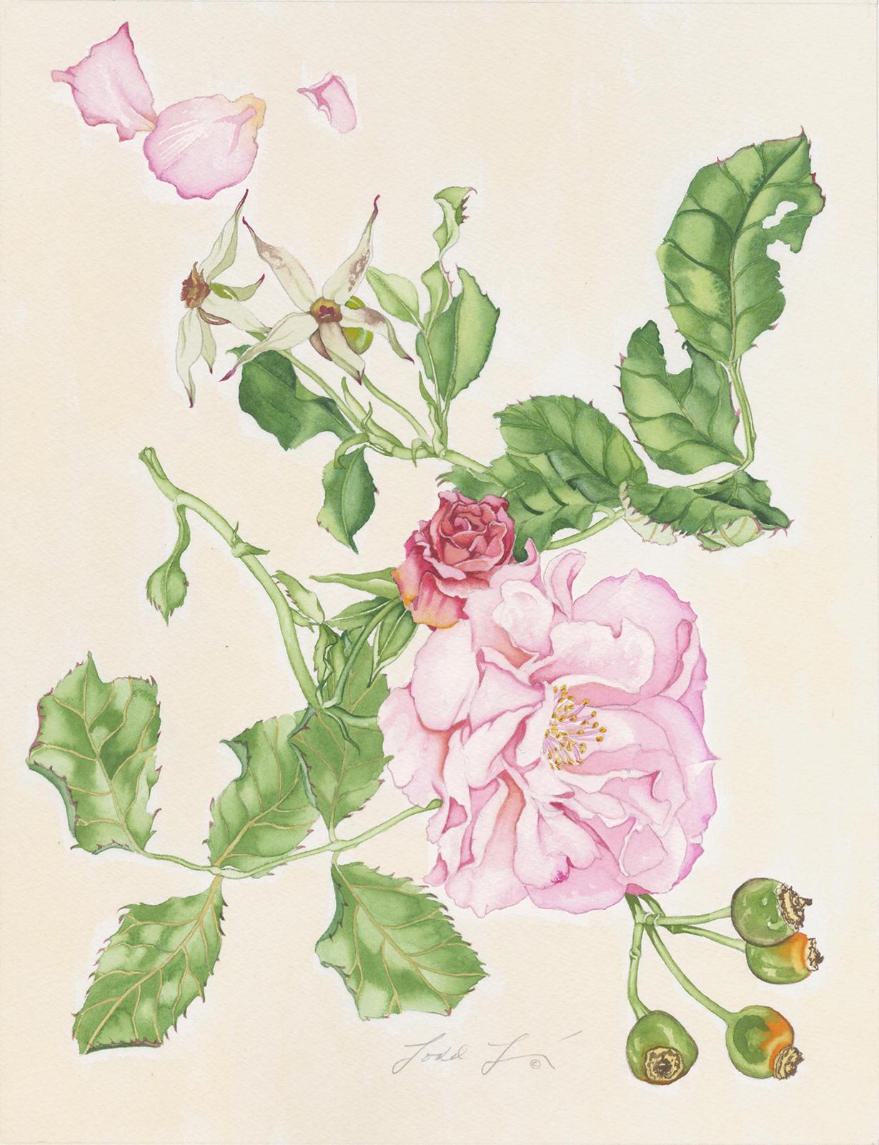Climbing Rose #141