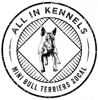 All In Kennels Miniature Bull Terrier