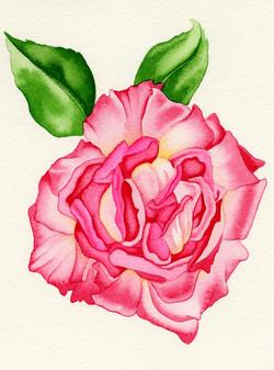 Rose #2 #84